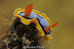 nudi on the top by Andre Philip 